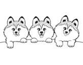 Disegno di 3 cuccioli da colorare