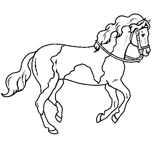 Disegno di cavallo 5 da colorare for Disegni di cavalli da colorare