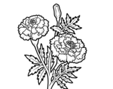 Disegno di Fiore meravigliarsi da colorare