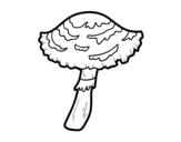 Disegno di Fungo lepiota cristata da colorare