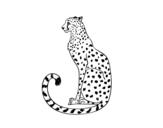 Disegno di Ghepardo seduto da colorare
