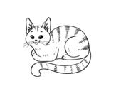 Disegno di Giovane gatto da colorare