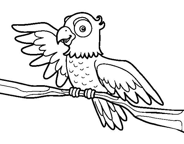 disegno di pappagallo in libert da colorare