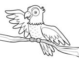 Disegno di Pappagallo in libertà da colorare