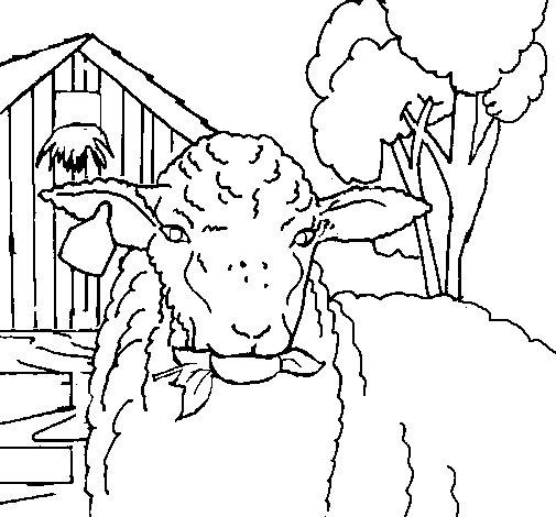 Disegno di Pecora che bruca una foglia  da Colorare