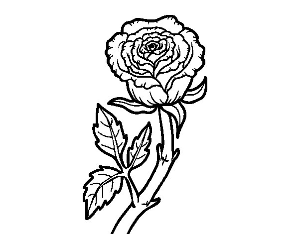 Disegno Di Rosa Con Foglie Da Colorare Acolore Com: Disegno Di Rosa Selvaggia Da Colorare