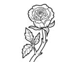 Disegno di Rosa selvaggia da colorare
