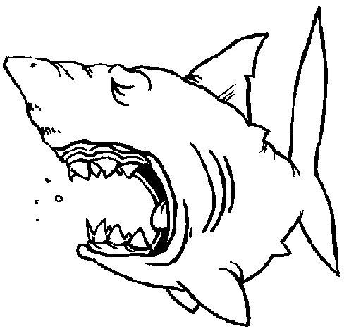Disegno di squalo da colorare for Disegno squalo