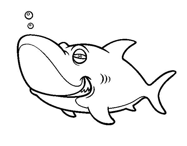 Disegno di squalo tigre da colorare for Disegno squalo
