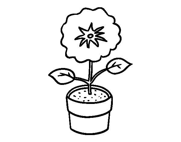 Disegno Fiori Da Colorare Con Google Disegno Di Un Fiore: Disegno Di Un Fiore Di Primavera Da Colorare