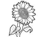 Disegno di Un girasole da colorare
