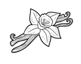 Dibujo de Vaniglia