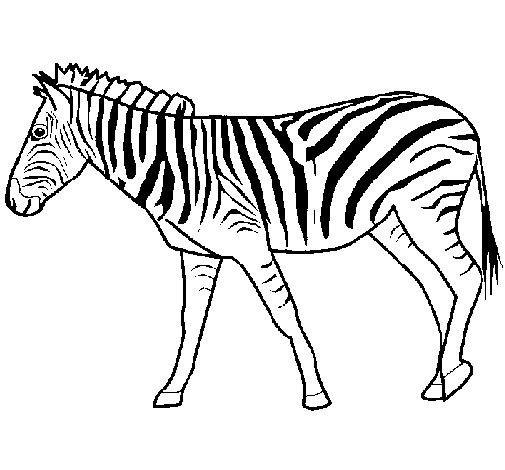disegno di zebra da colorare On zebra da colorare