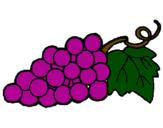 Disegno grappolo  pitturato su Uva