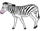 Disegno Zebra  pitturato su zebre