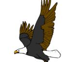 Disegno Aquila in volo  pitturato su aquila
