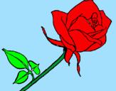 Disegno Rosa  pitturato su pippi