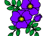 Disegno Papaveri  pitturato su violetta