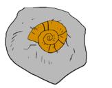 Disegno Chiocciola fossile  pitturato su federico