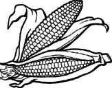 Disegno Pannocchia di granoturco  pitturato su licia