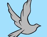 Disegno Colomba della pace in volo pitturato su cleofe
