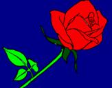 Disegno Rosa  pitturato su ELISA