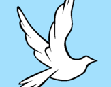 Disegno Colomba della pace in volo pitturato su Mery