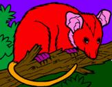 Disegno Scoiattolo Possum marsupiale pitturato su maria sole