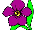Disegno Fiore  pitturato su violetta