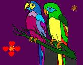 Disegno Pappagalli  pitturato su isarossi