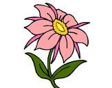 Disegno Fiore selvatico pitturato su samell
