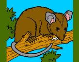 Disegno Scoiattolo Possum marsupiale pitturato su lucaborto