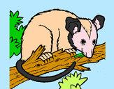 Disegno Scoiattolo Possum marsupiale pitturato su SARA08