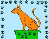 Disegno Gatto egiziano II pitturato su ale04