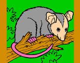 Disegno Scoiattolo Possum marsupiale pitturato su bizet
