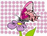 Disegno Farfalla sul fiore  pitturato su alessiacom