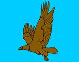 Disegno Aquila in volo  pitturato su GABRIEL17
