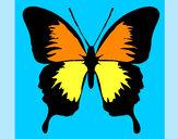 Disegno Farfalla con le ali nere pitturato su PAPA