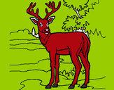 Disegno Giovane cervo pitturato su GABRIEL17
