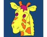 Muso di giraffa