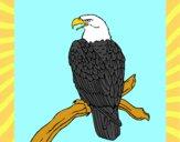Aquila su un ramo