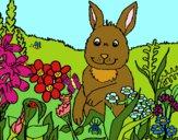 Coniglio in campagna