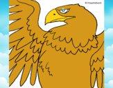 Aquila Imperiale Romana
