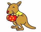 Boxing canguro