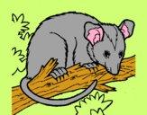 Scoiattolo Possum marsupiale