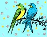 Coppia di uccelli