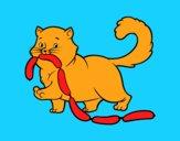 Gatto con salsiccia