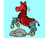 Zebra che salta sulle pietre