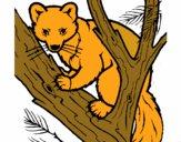 Martora europea su un albero