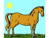 Cavallo dell'Andalusia